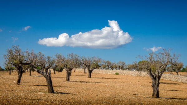6-Portfolio-openEdition-Mallorca-1-600x338.jpg